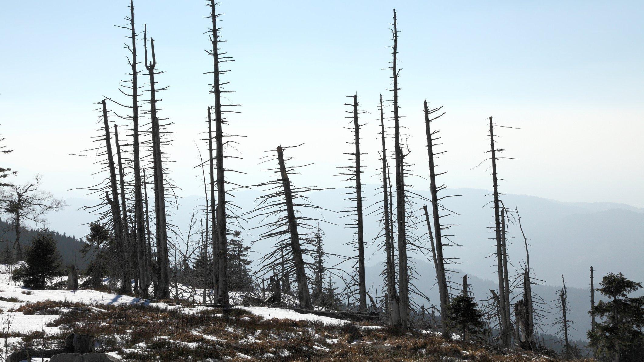 Die Angst vor dem Waldsterben trieb in den 1980er-Jahren die Deutschen um.