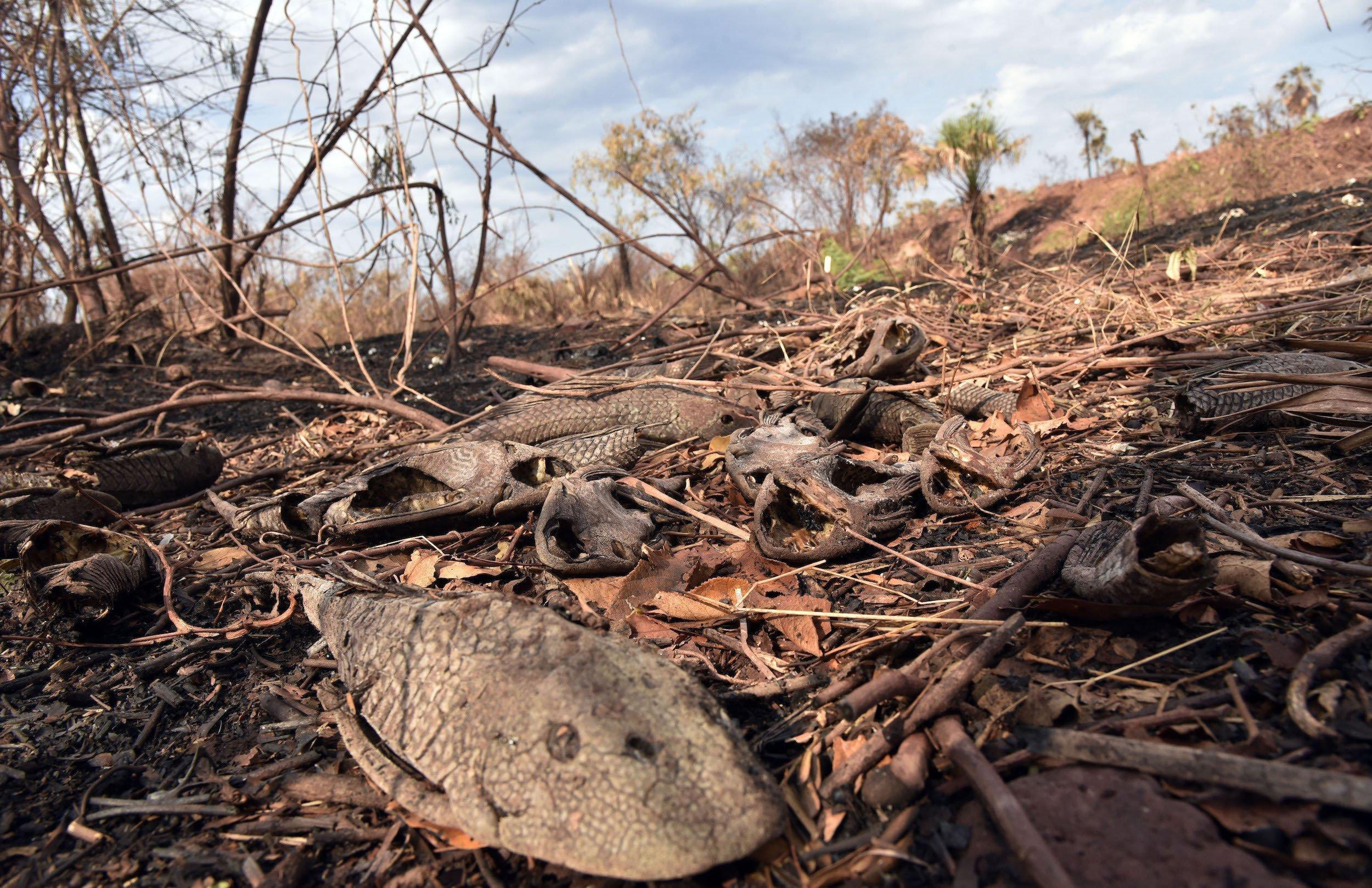 Ein toter Fisch und andere Kadaver in einem durch Feuer ausgetrockneten Gewässer – eine gespenstische Szenerie.