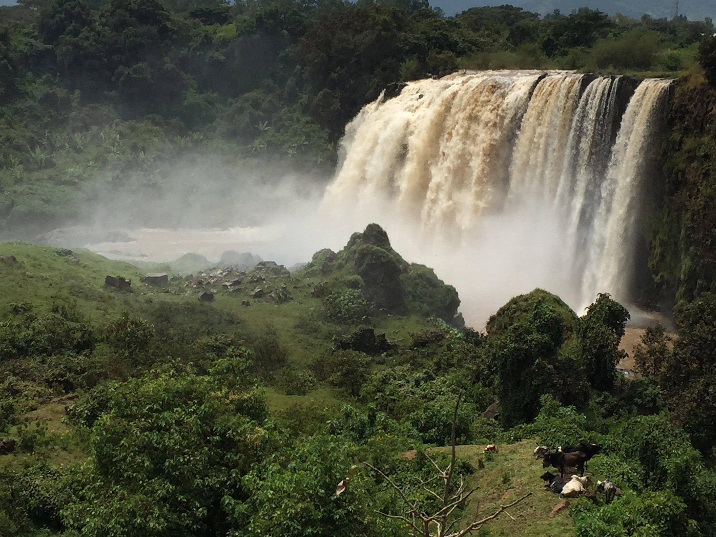 Ein großer Wasserfall am Blauen Nil inmitten von üppiger Vegetation, im Vordergrund grasende Kühe.