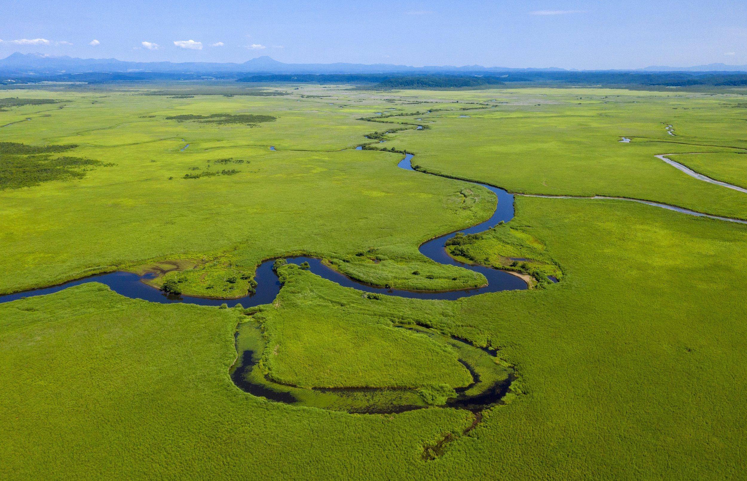 Eine riesige grüne Sumpflandschaft, durch die sich ein Fluss schlängelt