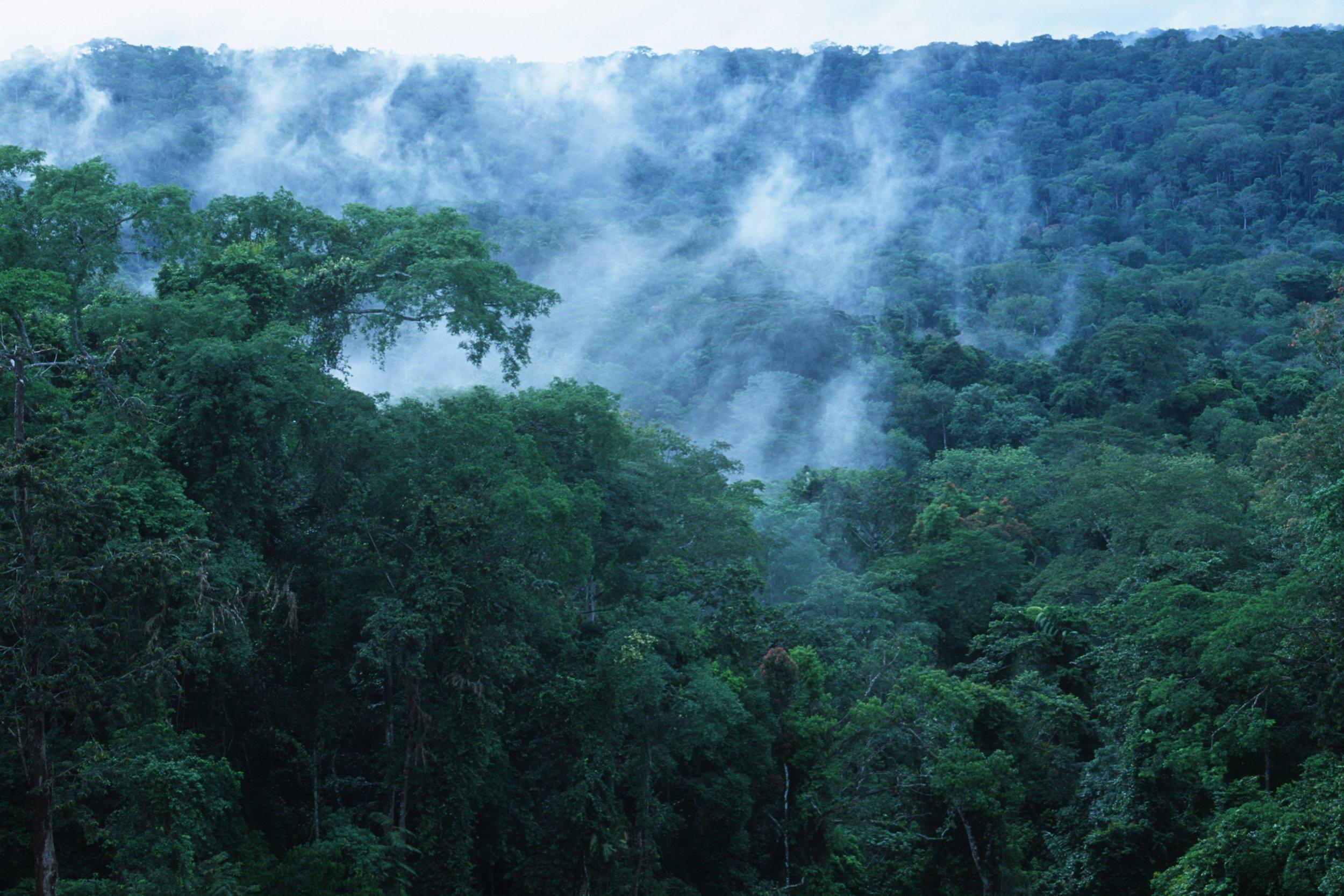 Tropischer Regenwald im Kongo-Becken, Wasserdampf steigt aus dem Wald.