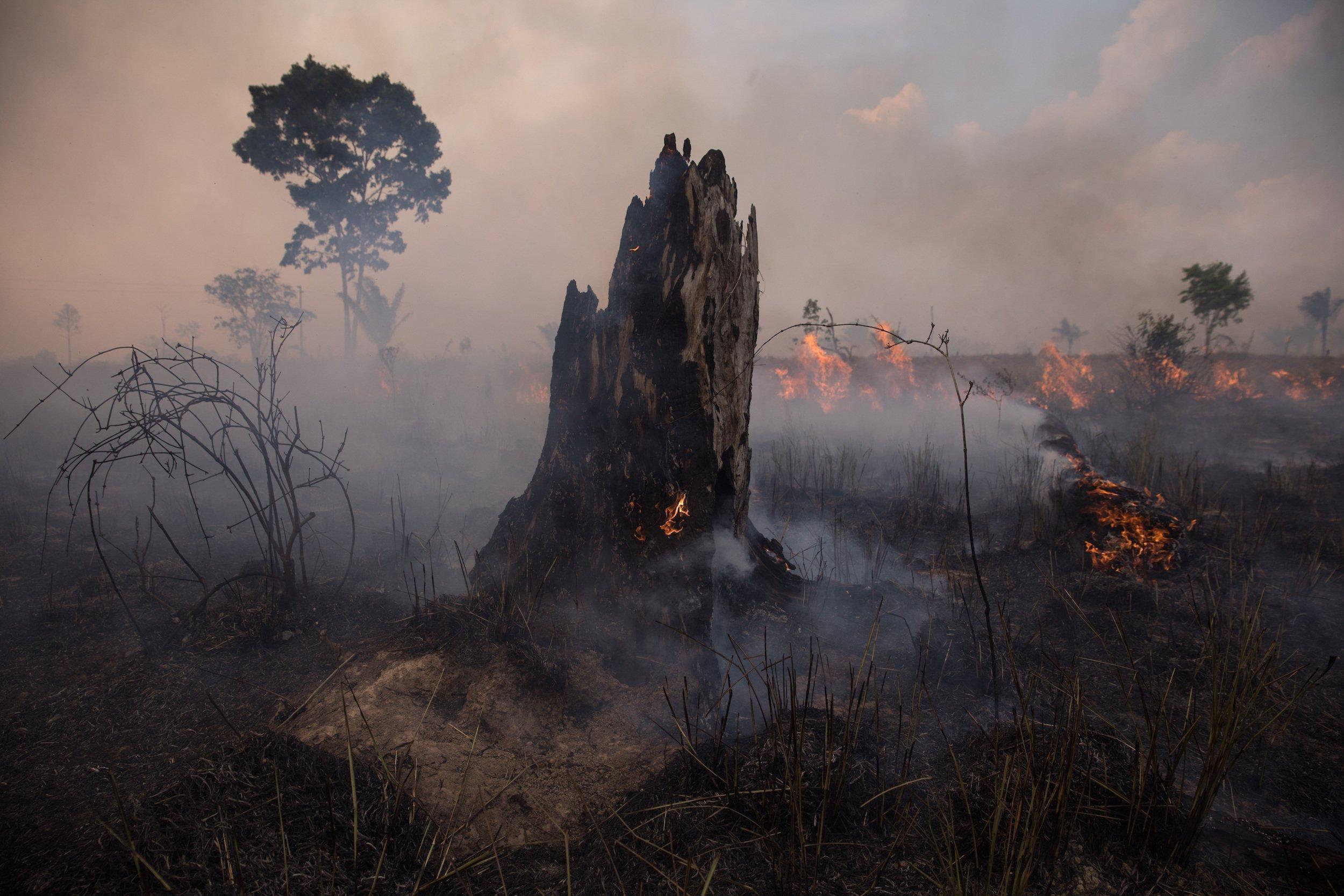 Ein brennender Baumstumpf vor einer rauchenden Rodungsfläche im Amazonas.