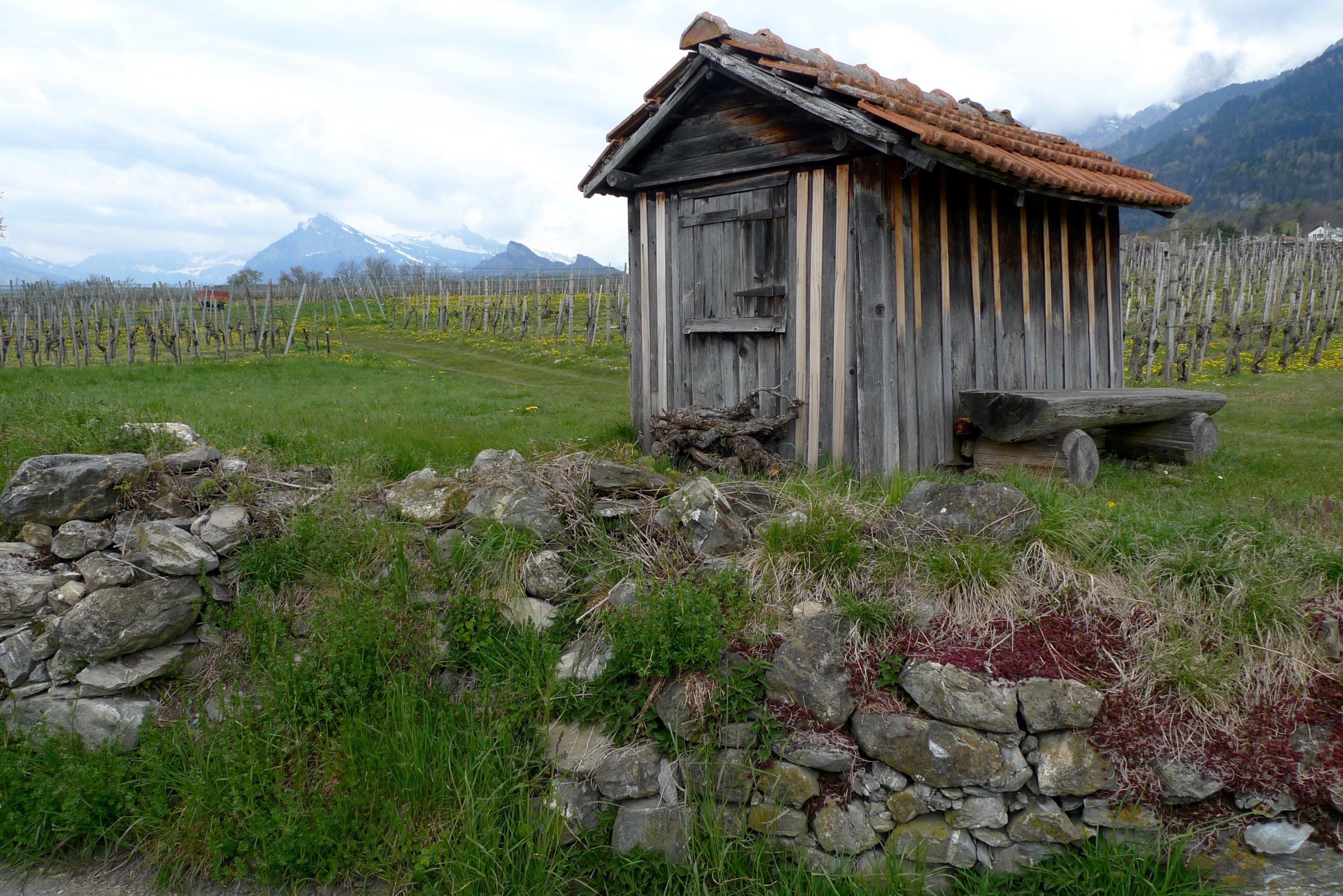 Ein alter Schuppen und eine alte Mauer im Weinbaugebiet der Bündner Herrschaft.