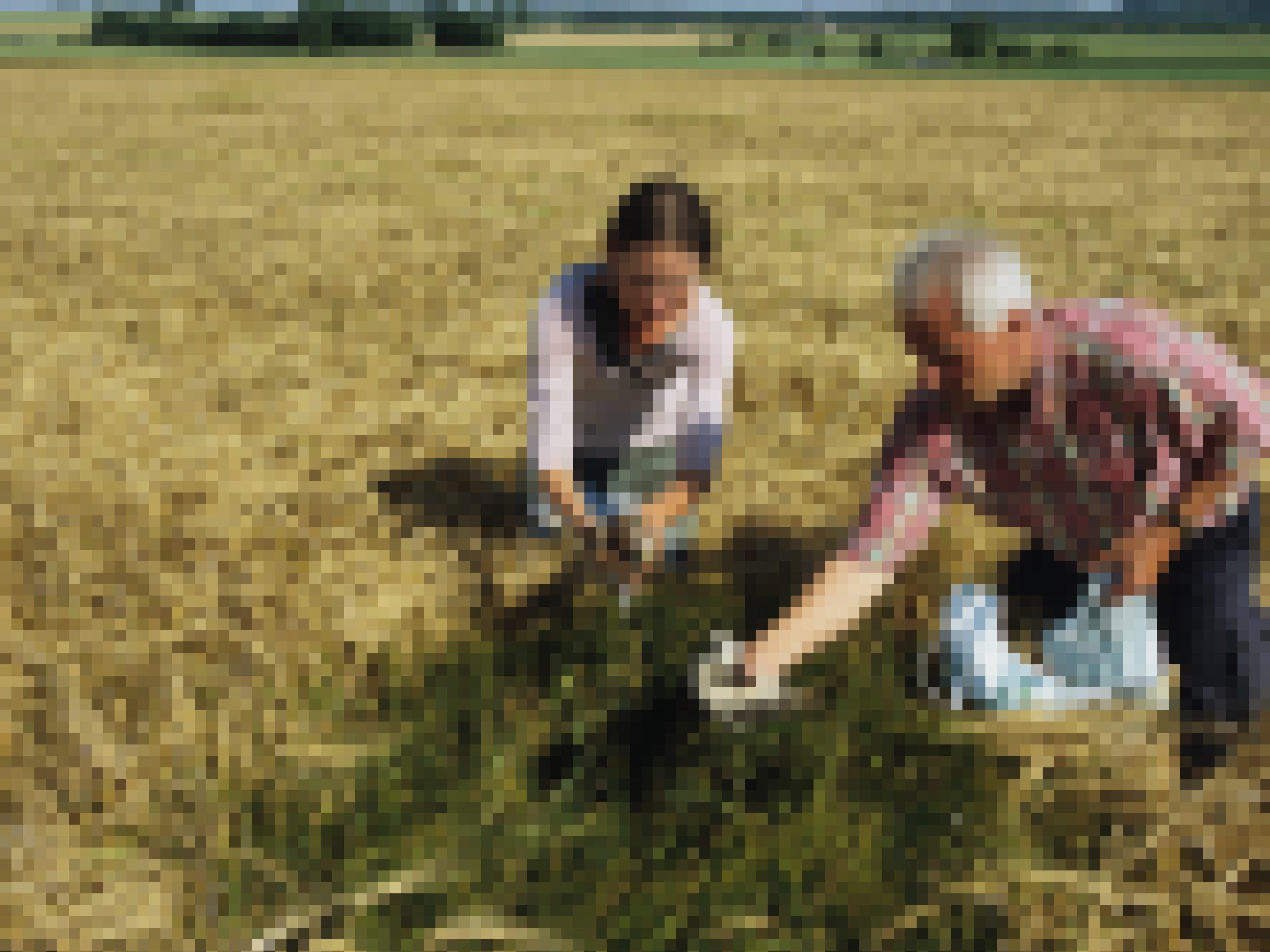 Die Naturschützer Claudia Pürkhauer und Edgar Hoh kümmern sich um ein Gelege von Wiesenweihen und versuchen, einen Jungvogel zu beringen.