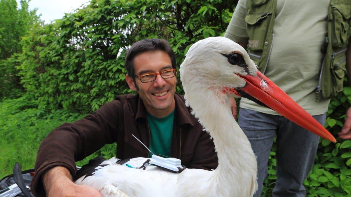 Martin Wikelski, Direktor des Max-Planck-Instituts für Ornithologie mit einem Storch, der einen Sender trägt.