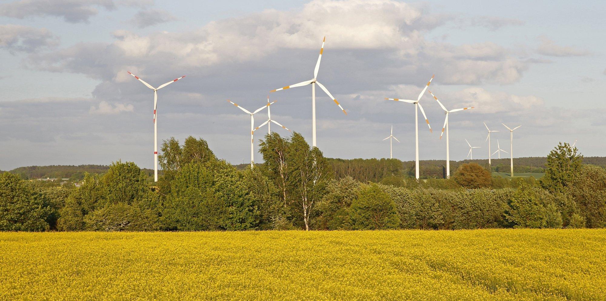 Das Bild zeigt Windräder als Teil eines ganzen Parks solcher Anlagen in einer Agrarlandschaft mit Rapsfeld.