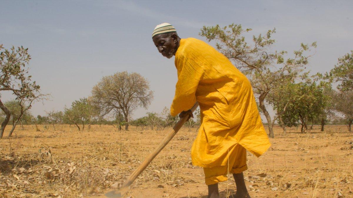 """Aufforstung in Afrika: Wird die """"Große Grüne Mauer"""" zum Bollwerk gegen die Klimakrise?"""