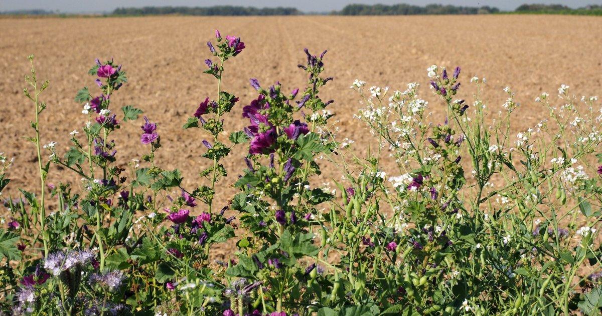 Bringt EU-Agrarreform ökologische Wende?