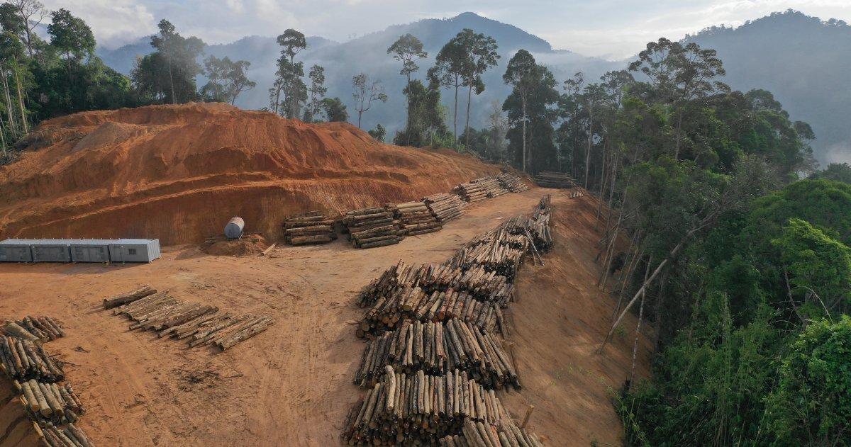 Umweltpolitik: Neue Hürden beim globalen Wettlauf zum Schutz der Natur